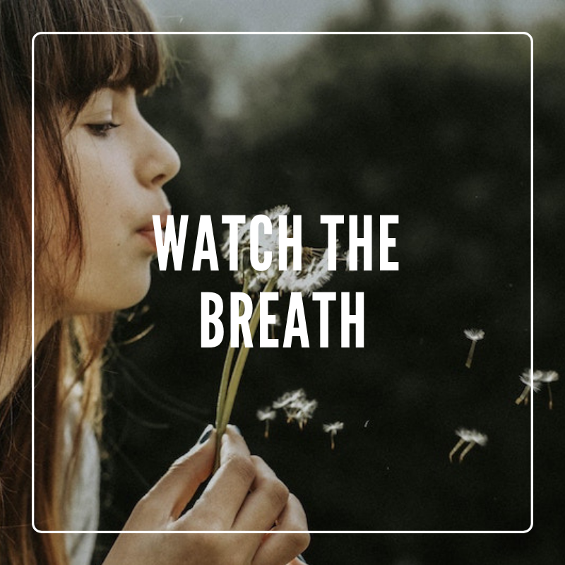 watch the breath mindfulness meditation